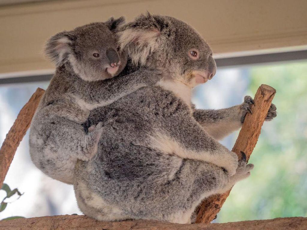 Cukup #dirumahaja Bisa Kunjungi 5 Destinasi Keren Australia