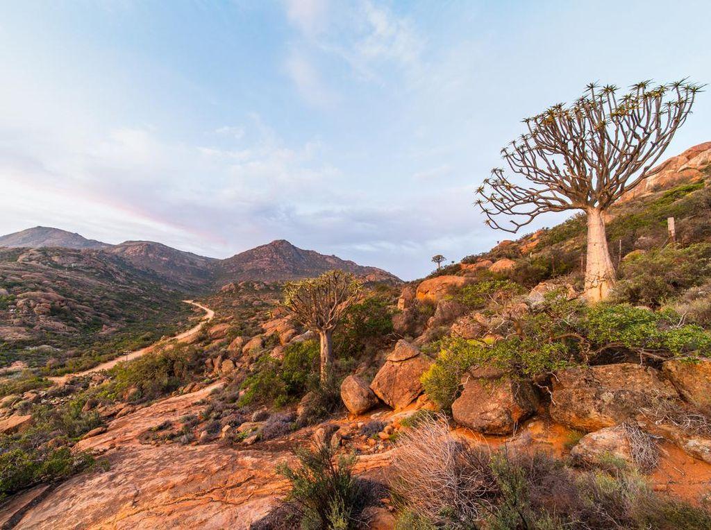 Hari Bumi Sedunia, Yuk Kenali Gurun Unik di Afrika Selatan