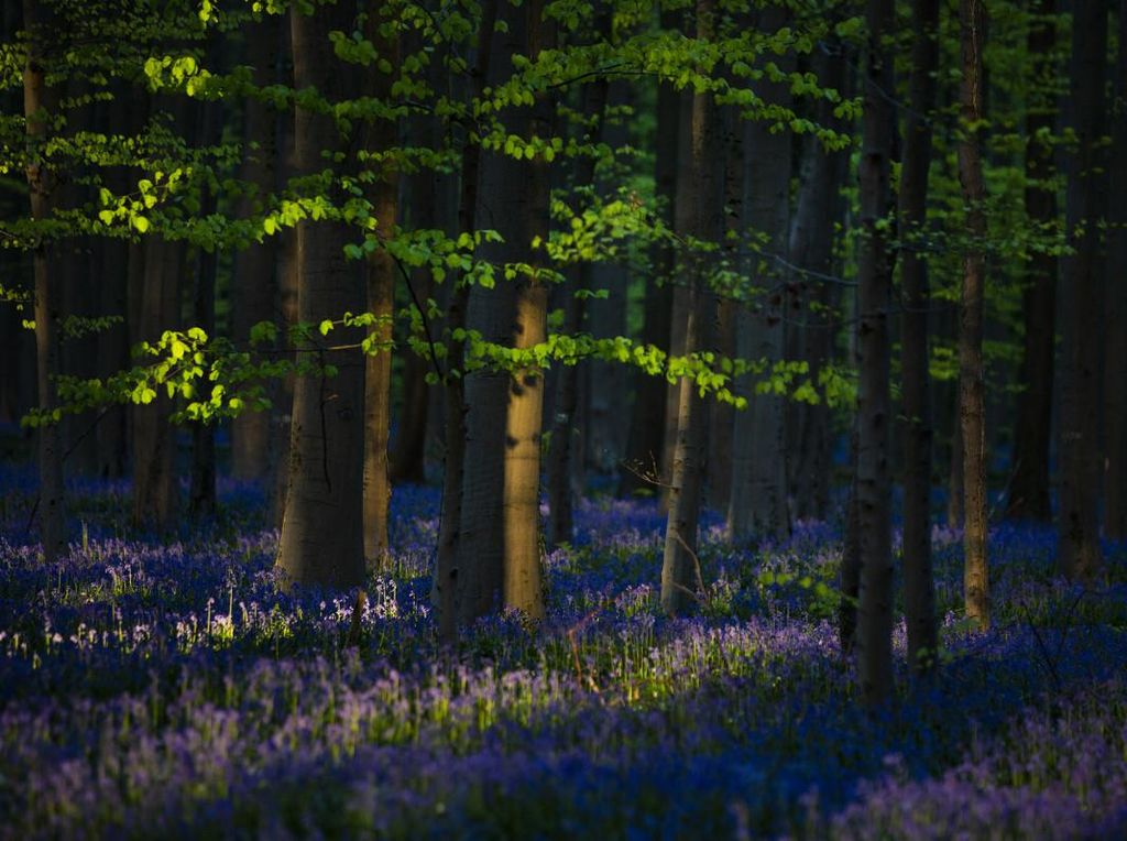 COVID-19 Malah Bikin Hutan Ini Makin Cantik