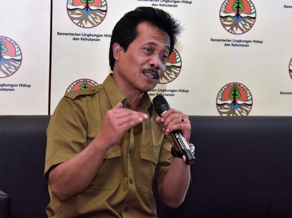 KLHK Sebut Tren Deforestasi Indonesia Cenderung Stabil