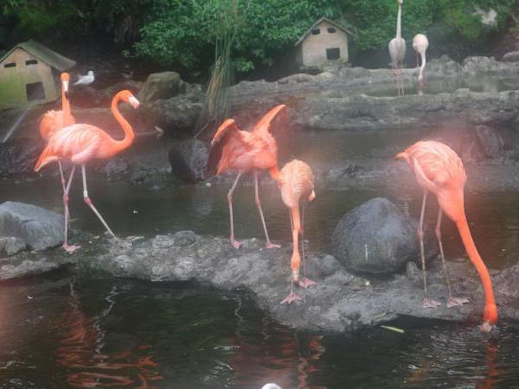 Foto: Cantiknya Burung Flamingo di Batu Secret Zoo