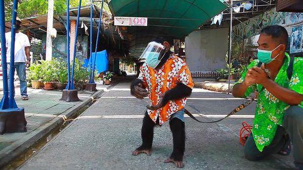 Simpanse Viral