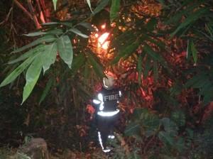 Sarang Tawon Vespa yang Tewaskan Kakek di Klaten Dimusnahkan
