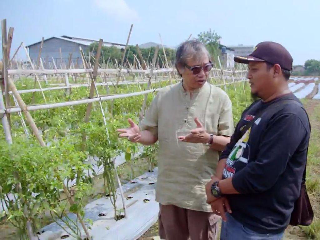 Bertani di Kota, Pria Ini Mampu Hasilkan 1 Ton Cabai dalam 3 Hari