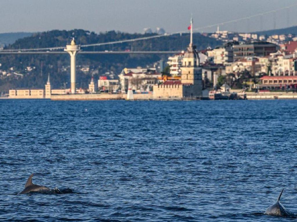 Istanbul Lockdown, Lumba-lumbanya Bisa Berenang Bebas