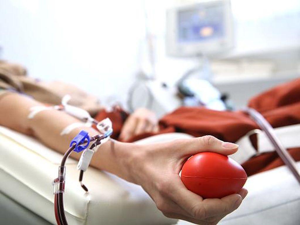 Tak Semua Pasien Sembuh COVID-19 Bisa Donor Plasma Darah, Ini Kriterianya