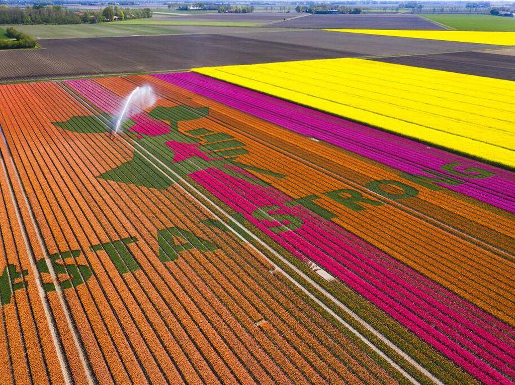 Pesan Solidaritas Corona dari Hamparan Bunga Tulip
