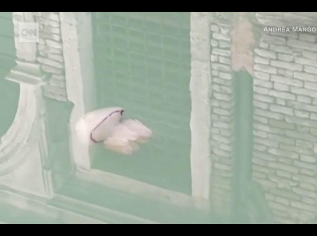 Ubur-ubur Terlihat Berenang di Kanal Venesia