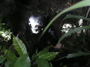 2 Beruang Madu Lepas dari Kandang Wildlife Rescue Centre Yogya