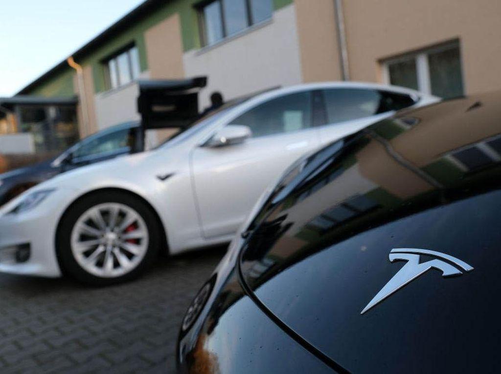 Pembangunan Pabrik Tesla di Jerman Terancam Batal Gegara Ular