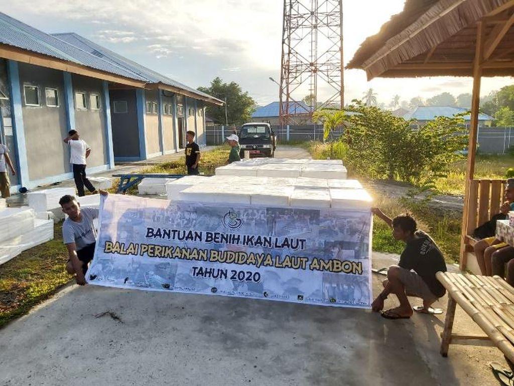 KKP Bantu 53,1 Juta Benih & 75 Ton Pakan ke Pembudidaya Ikan
