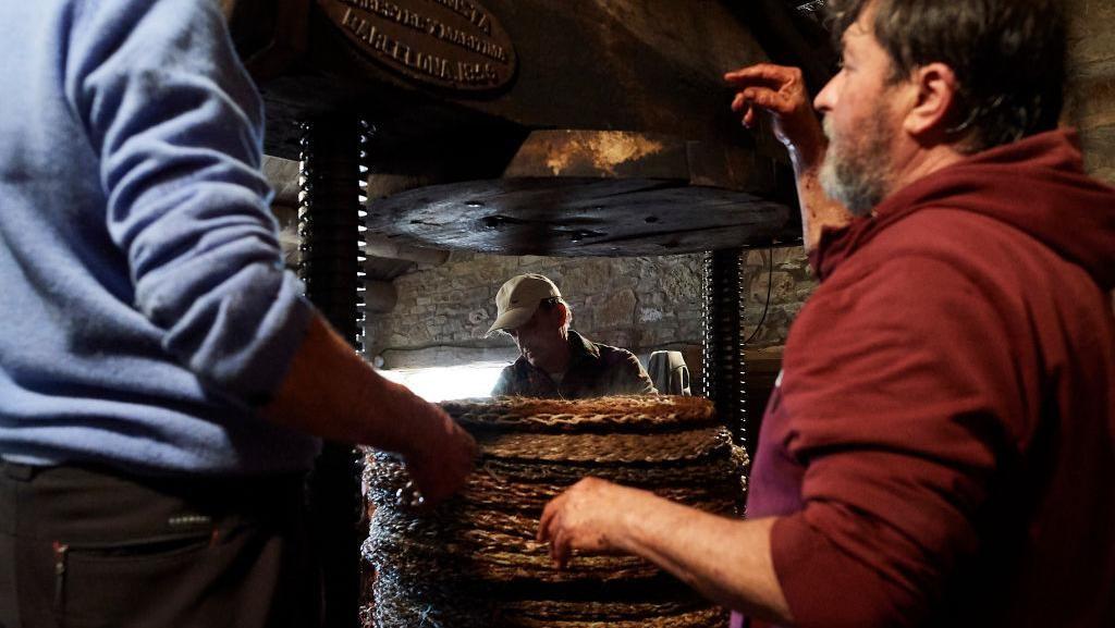 Potret Penyulingan Minyak Zaitun di Spanyol
