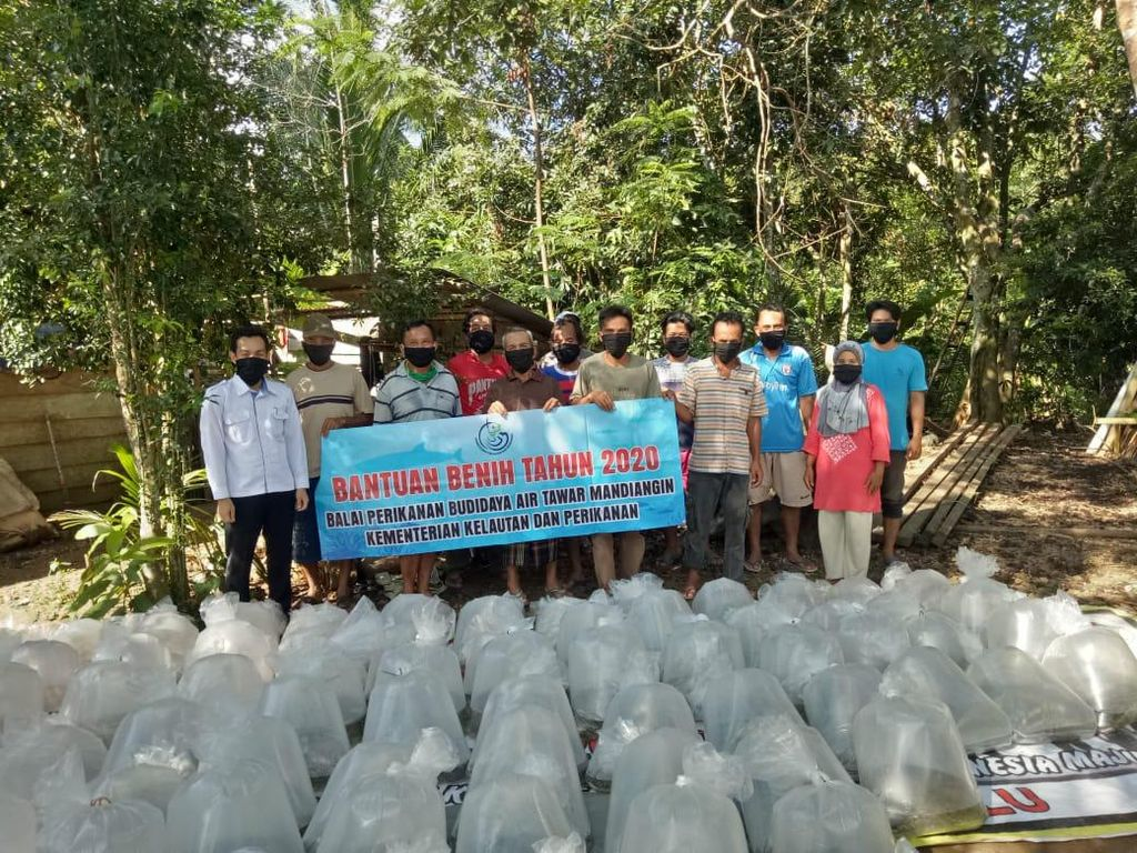KKP Salurkan 53,1 Juta Benih Ikan ke Pembudidaya Terdampak Corona