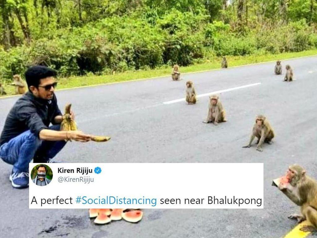 Kocak! Monyet Juga Lakukan Social Distancing Saat Makan Buah