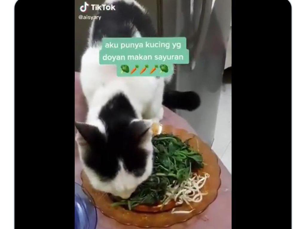 Doyan Pecel dan Buah, Aksi Makan Kucing yang Antimainstream