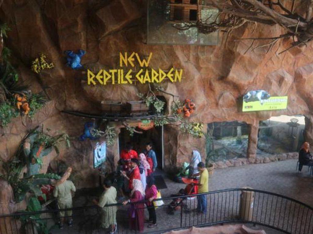 Ini Rumah Komodo & Reptil Lainnya di Jawa Timur