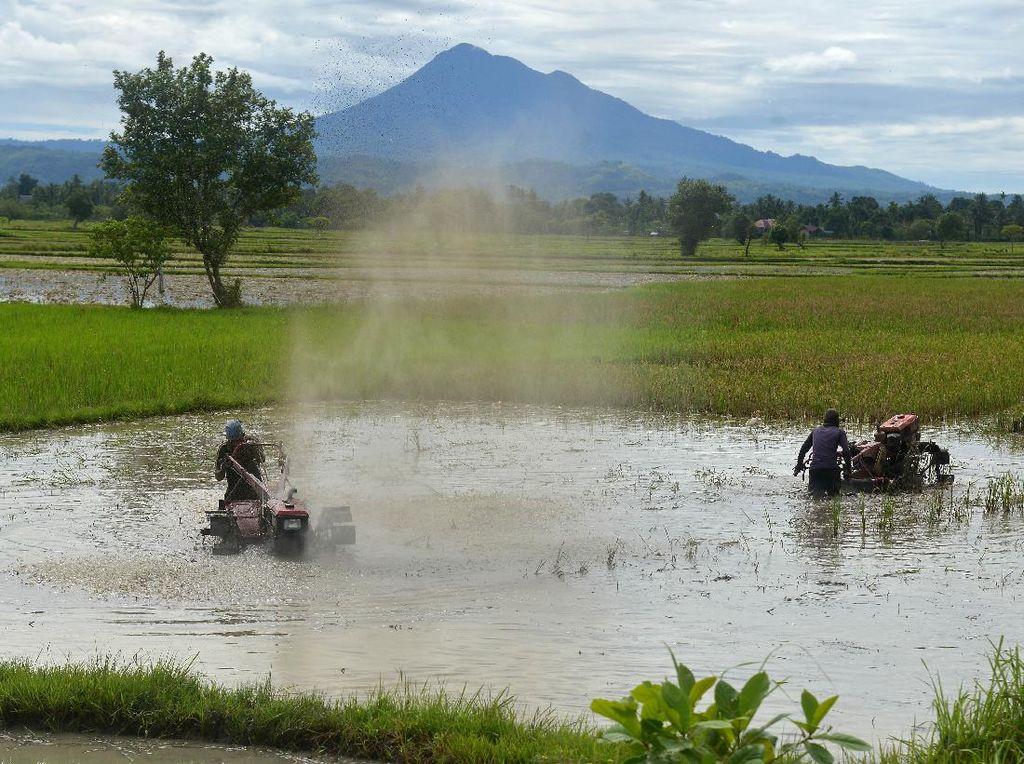 Produksi Beras di Aceh Diprediksi Tembus 1 Juta Ton