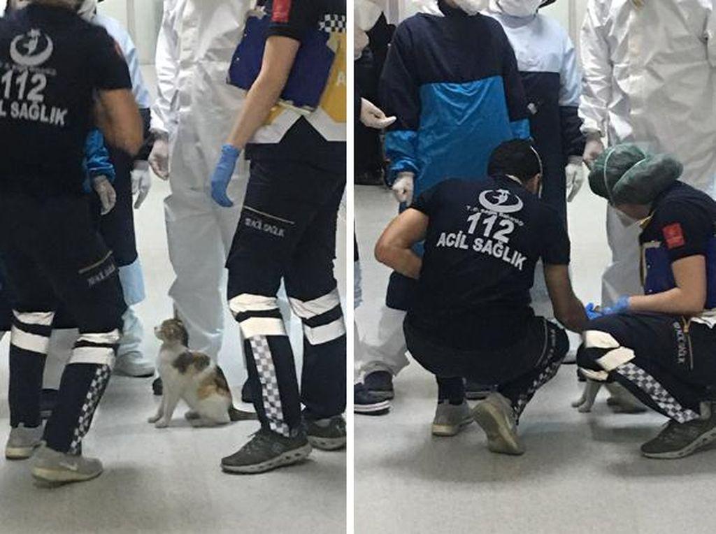 Viral Paramedis Tolong Induk Kucing yang Anaknya Sakit