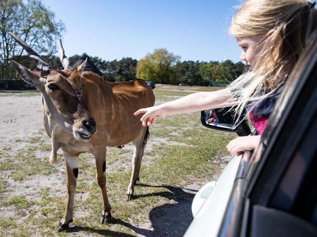 Kebun Binatang Wellington Buka Lagi, Situsnya Crash Diserbu Traveler