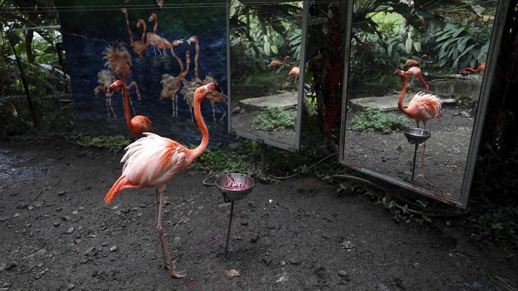 Potret Muram Satwa Kebun Binatang Bertahan di Tengah Wabah Corona