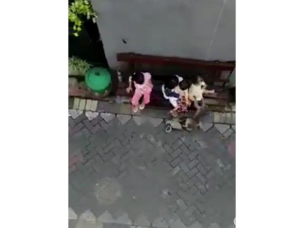 Bocah yang Diserang dan Diseret Monyet di Surabaya Sempat Trauma