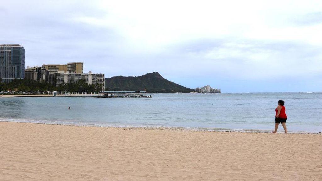 Foto: Sepinya Hawaii Saat Sedang Menutup Diri