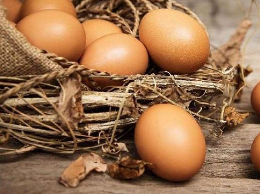 Alasan Pemerintah Larang Telur Infertil Beredar di Masyarakat