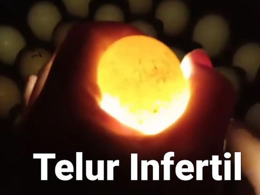 Ini Fakta Seputar Telur Infertil yang Dilarang Pemerintah