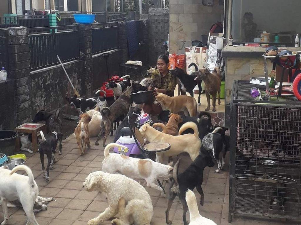 Viral Wanita di Bali Asuh 52 Anjing-Diminta Kurangi Peliharaan Saat Pandemi