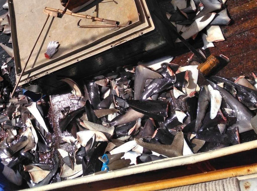 Kapal China Pembuang Jenazah ABK WNI: Ngaku Cari Tuna, Ternyata Buru Hiu
