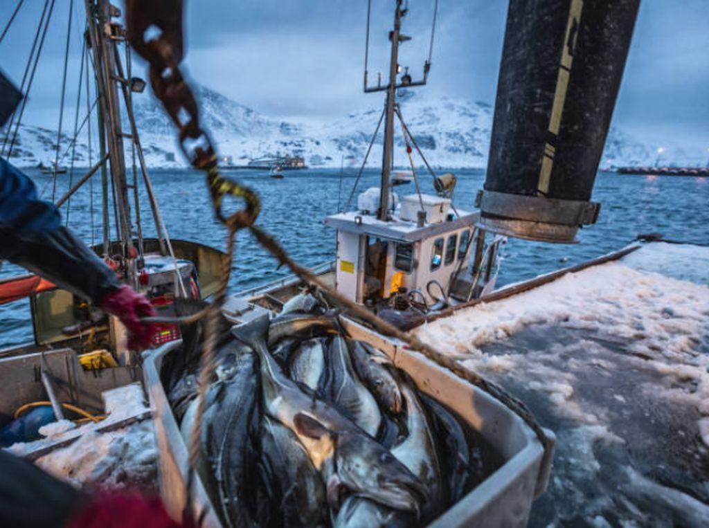 Viral Kasus ABK Pencari Ikan di Kapal China, Ini 5 Kasus Serupa yang Pernah Terjadi