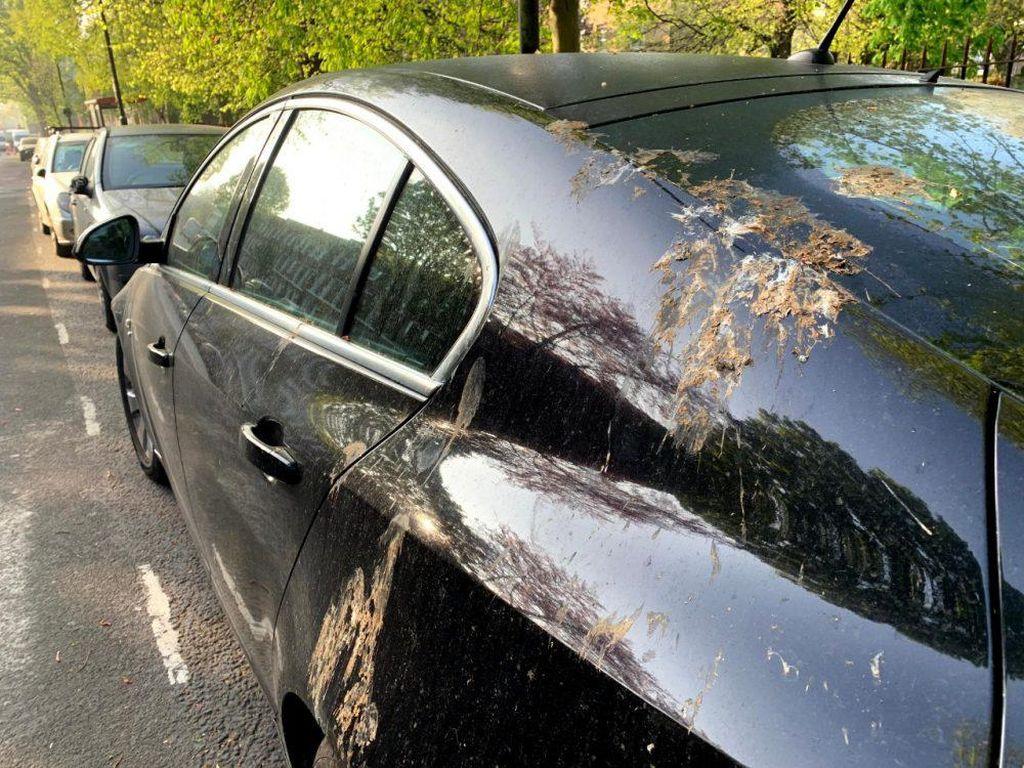 Warna Mobil Ini Paling Sering Jadi Sasaran Tembak Tahi Burung