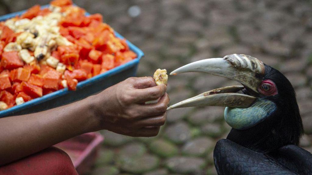 Halo Traveler, Burung-Burung di Taman Mini Butuh Bantuan Makanan