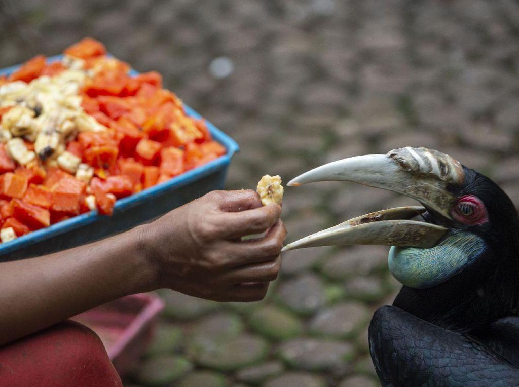 Kunjungan Taman Burung TMII Diprediksi Pulih Akhir Tahun