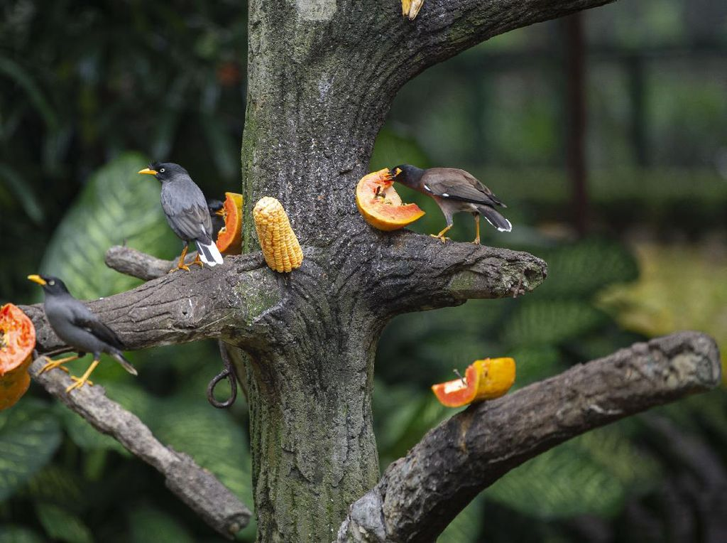 Waduh! Taman Burung TMII Kurang Stok Makanan, Perlu Bantuan