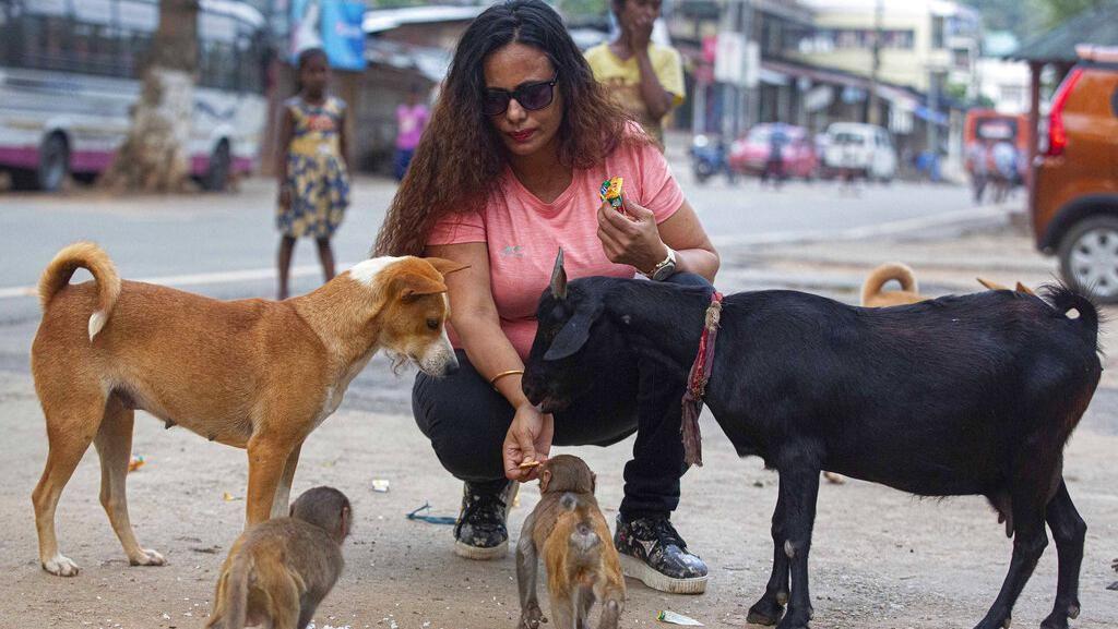 Potret Wanita di India Beri Makan Hewan Terlantar Saat Lockdown