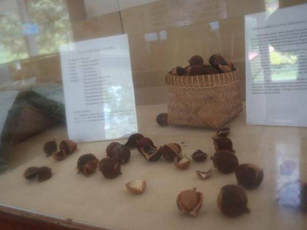 Mengenal Dunia Perkebunan di Museum? Bisa Kok
