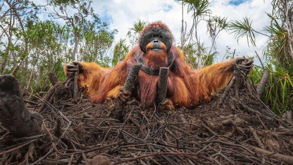 Deretan Foto Natural World Photography Terbaik 2020 (3)