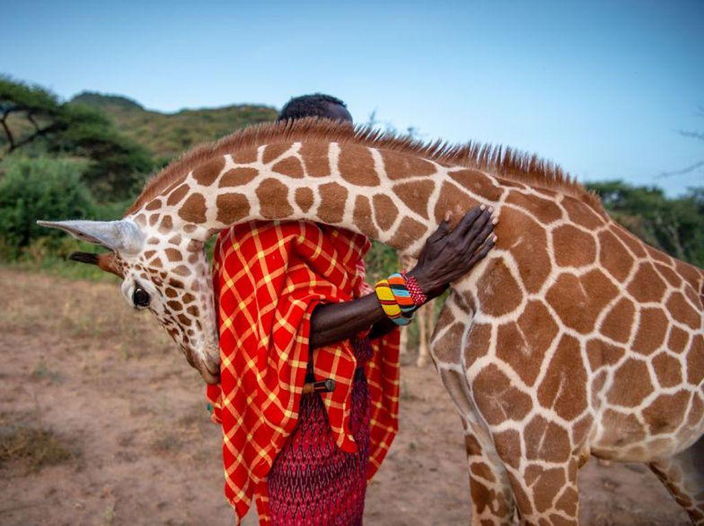 Deretan Foto Natural World Photography Terbaik 2020
