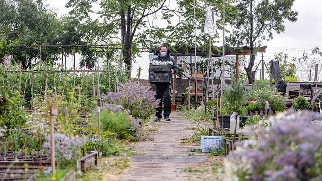 Hadapi Masa Pandemi COVID -19 Warga Madrid Tanam Sayuran
