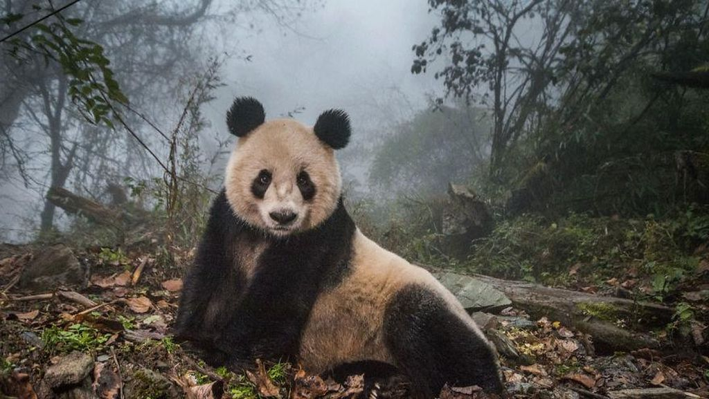 Deretan Foto Natural World Photography Terbaik 2020 (2)