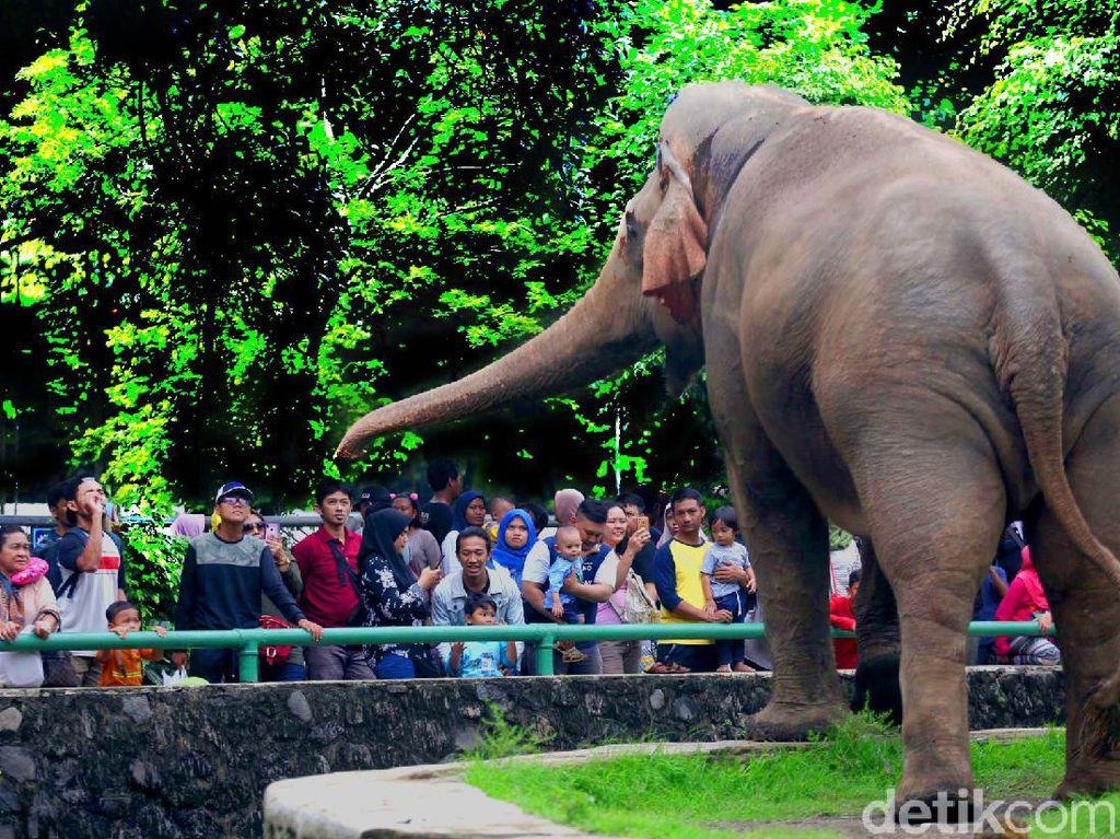 Sinyal SOS dari Kebun Binatang