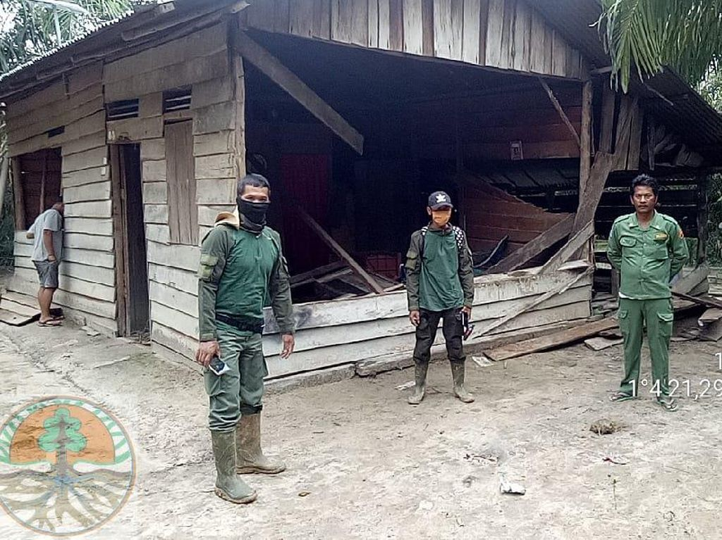 Kawanan Gajah Liar Masuk Desa di Riau, Rumah dan Kebun Sawit-Nanas Rusak
