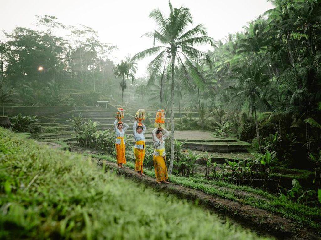 Makna Filosofi Subak Bali yang Jadi Primadona Turis untuk Foto