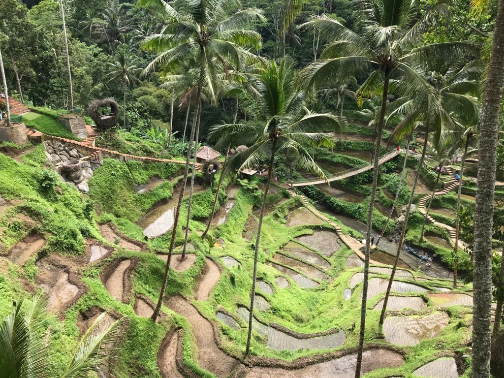 Mengenal Subak yang Berasal dari Bali, Warisan Budaya dan Makna Filosofinya
