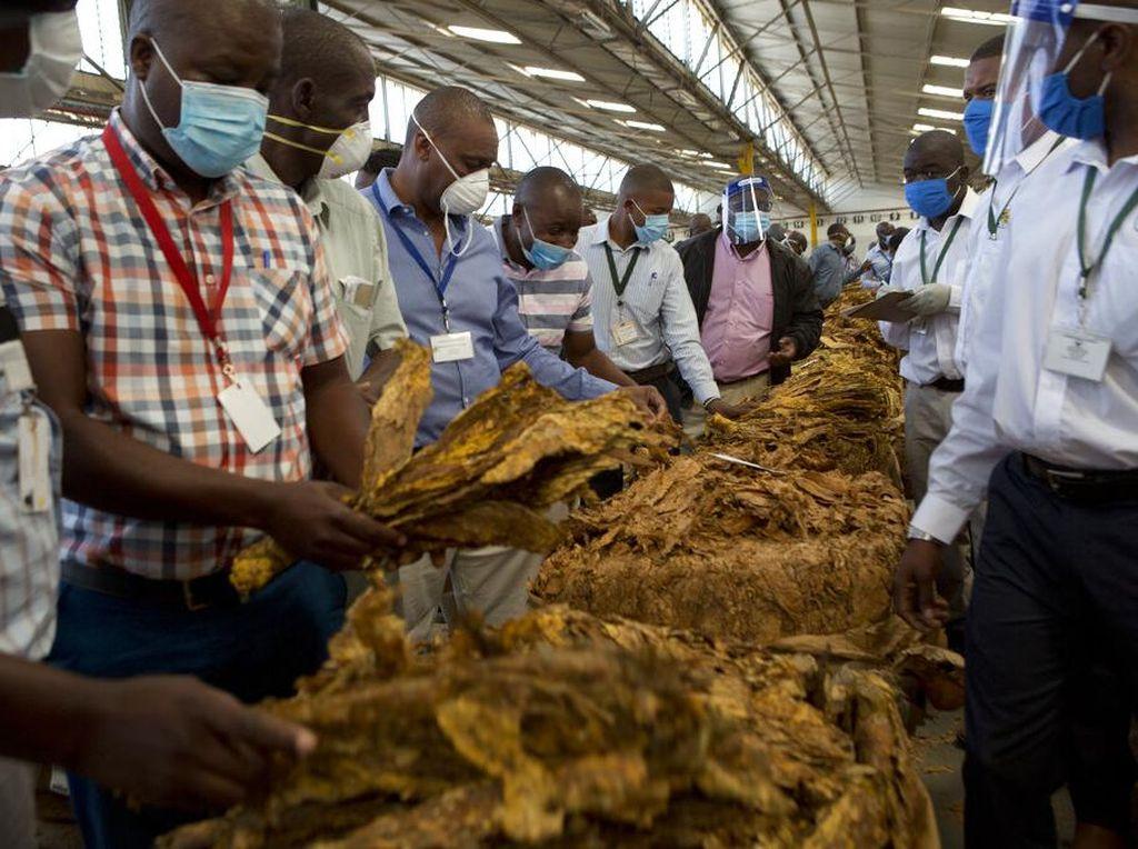 Industri Hasil Tembakau Pincang, karena Apa?