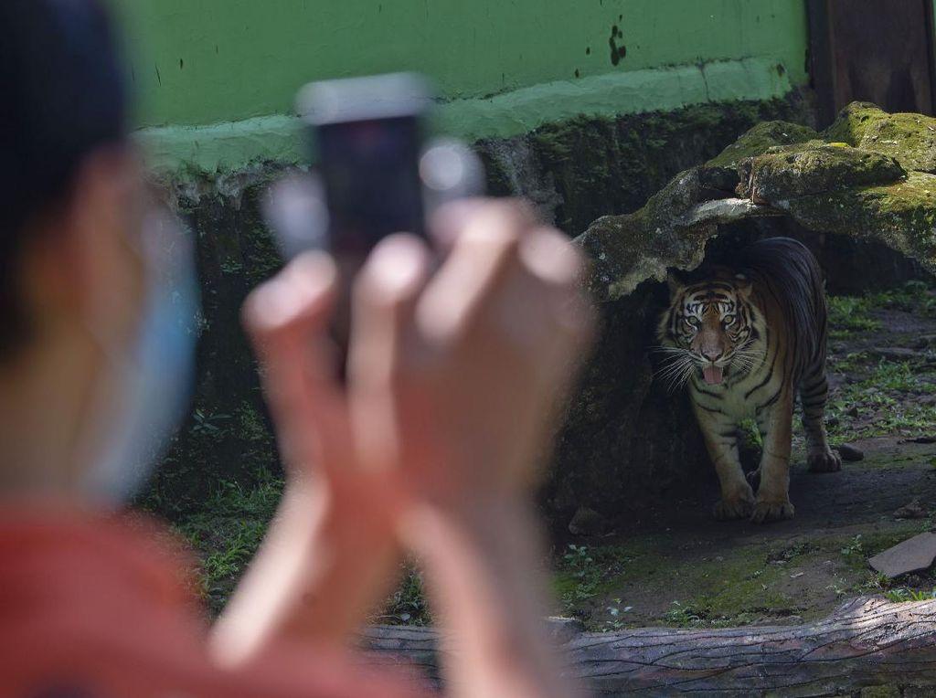 Buat yang Kangen, Ragunan Hadirkan Kebun Binatang via Instagram