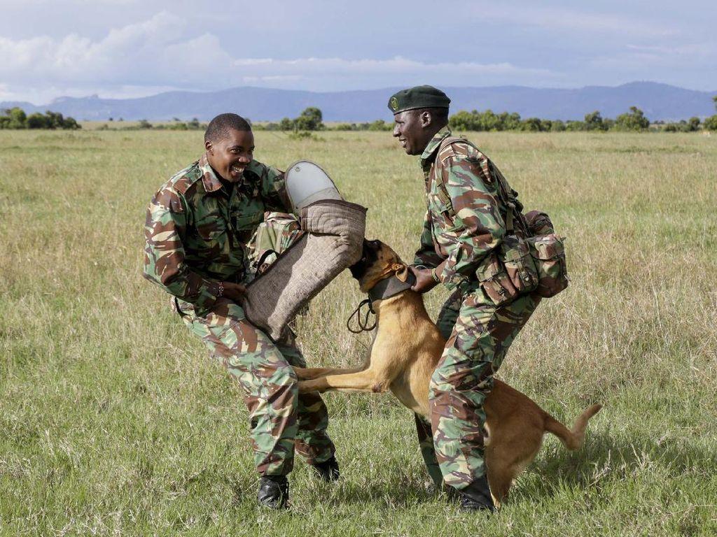 Aksi Polisi Kenya Jaga Satwa di Kawasan Konservasi dari Pemburu Liar