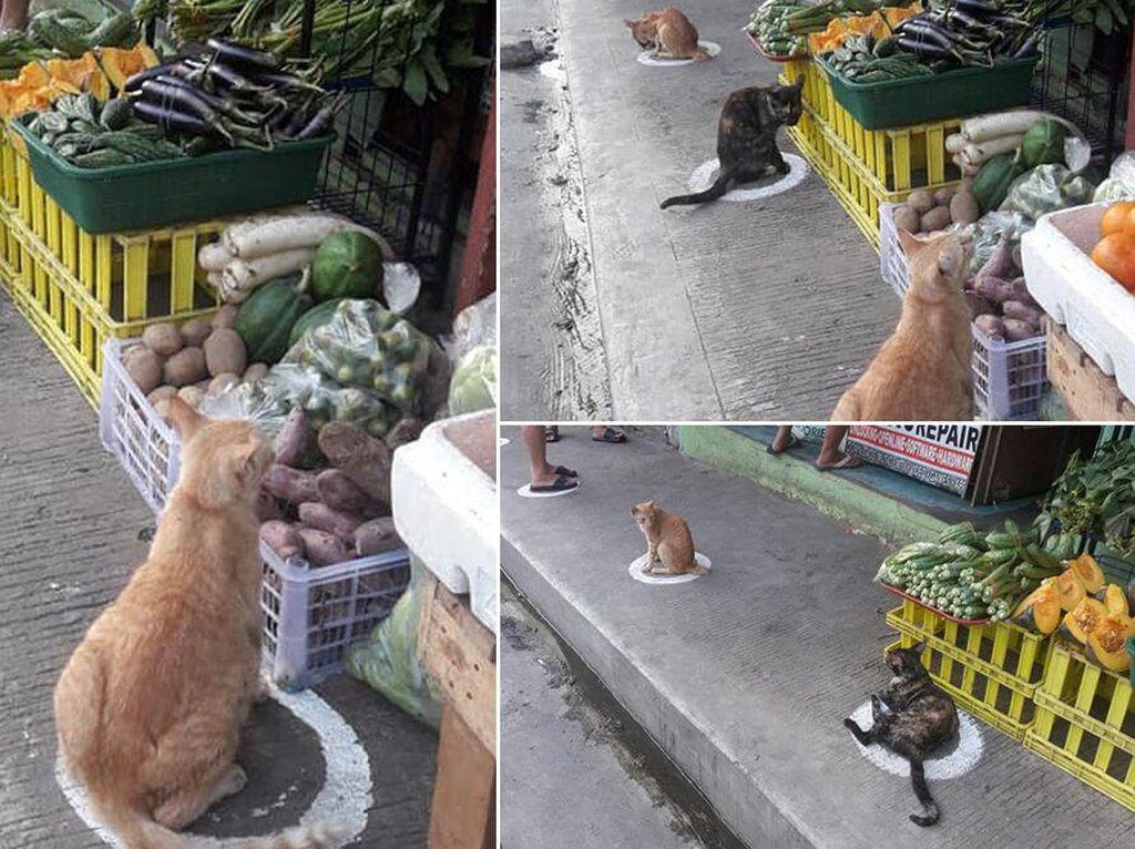 Di Pasar Kawanan Kucing Liar Ini Terapkan Social Distancing