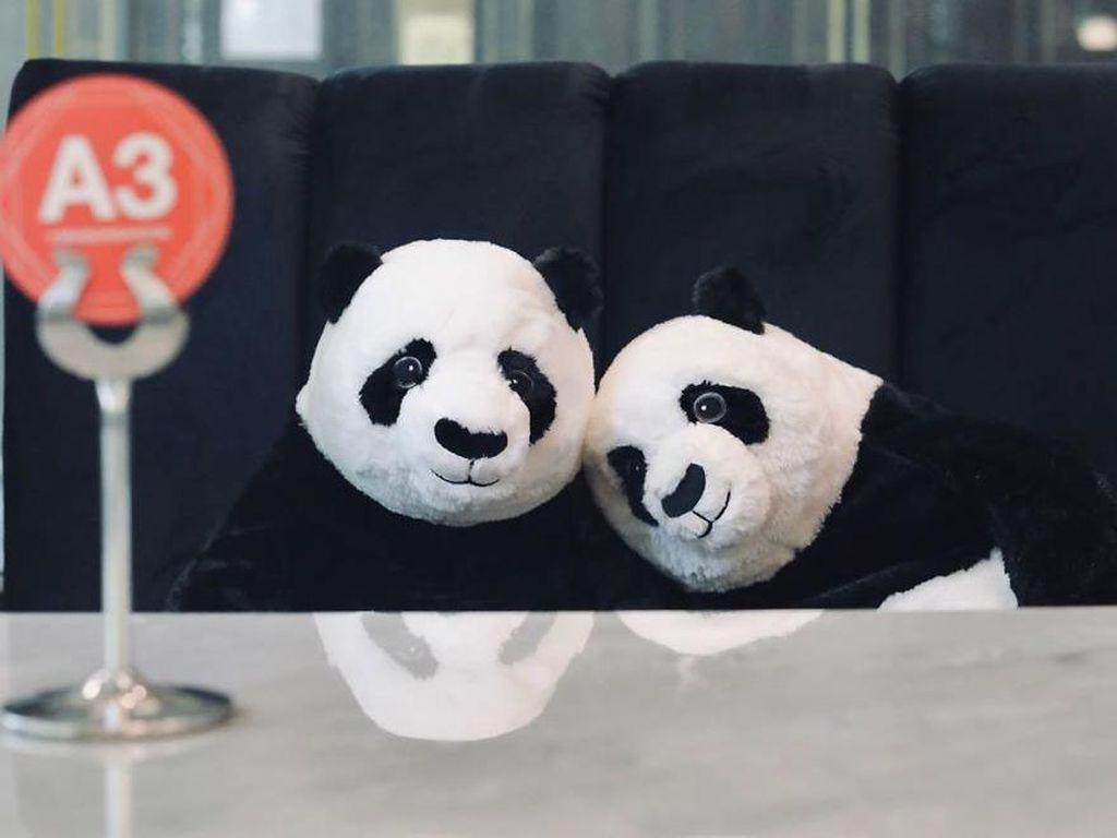 Viral Bahasa Panda di Soal UTBK, Bagaimana Hewan Lucu Nan Imut Itu Bicara?